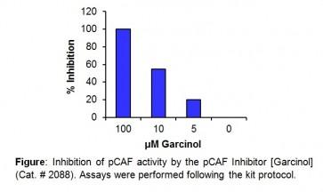 pCAF Inhibitor Screening Kit (Fluorometric)