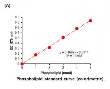 Phospholipid Assay Kit (Colorimetric/Fluorometric)