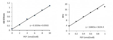 PEP Colorimetric/Fluorometric Assay Kit