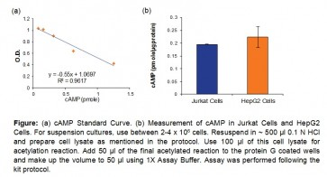 cAMP Direct Immunoassay Kit (Colorimetric)