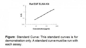 EGF (rat) ELISA Kit