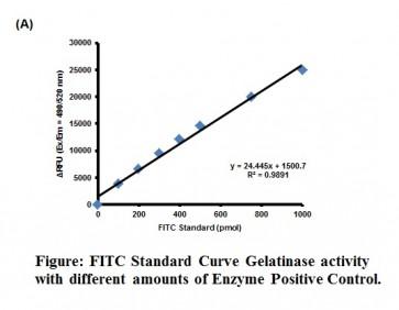 Gelatinase (Gelatin Degradation/Zymography) Assay Kit (Fluorometric)