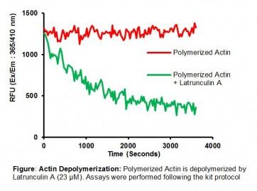 Actin Polymerization/ Depolymerization Assay Kit (Fluorometric)