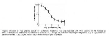 Transglutaminase Inhibitor Screening Assay Kit