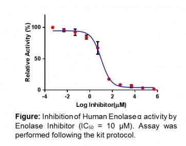 Human Enolase α Inhibitor Screening Kit (Colorimetric)