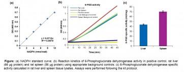 6-Phosphogluconate Dehydrogenase Activity Colorimetric Assay Kit