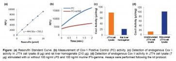 Cyclooxygenase (COX) Activity Assay Kit (Fluorometric)