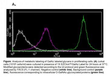 EZClick™ O-GalNAc Modified Glycoprotein Assay Kit (FACS/Microscopy, Green Fluorescence)