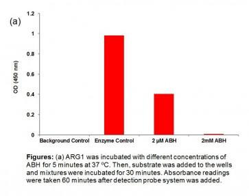 Arginase I (ARG1) Inhibitor Screening Kit (Colorimetric)
