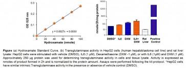 Transglutaminase Activity Assay Kit (Colorimetric)