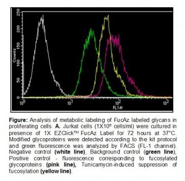 EZClick™ Fucose (FucAz) Modified Glycoprotein Assay Kit (FACS/Microscopy, Green Fluorescence)