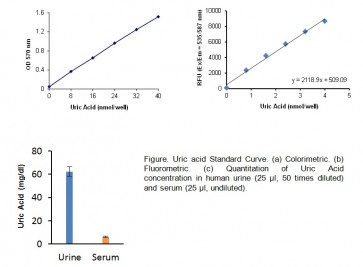 Uric Acid Colorimetric/Fluorometric Assay Kit