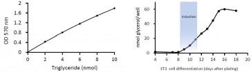 Adipogenesis Colorimetric/Fluorometric Assay Kit