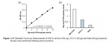 Glycerol-3-Phosphate (G3P) Colorimetric Assay Kit
