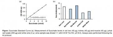 Succinate (Succinic Acid) Colorimetric Assay Kit