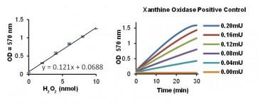 Xanthine Oxidase Activity Colorimetric/Fluorometric Assay Kit