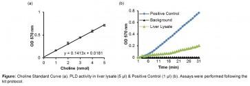 Phospholipase D (PLD) Activity Colorimetric Assay Kit