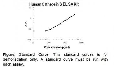 Cathepsin S (human) ELISA Kit
