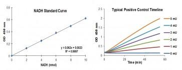 Aldehyde Dehydrogenase Activity Colorimetric Assay Kit