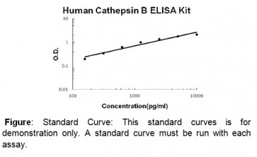 Cathepsin B (human) ELISA Kit