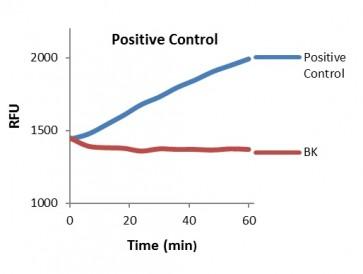 Protease Activity Fluorometric Assay Kit