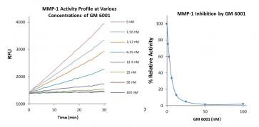 MMP-1 Inhibitor Screening Kit (Fluorometric)