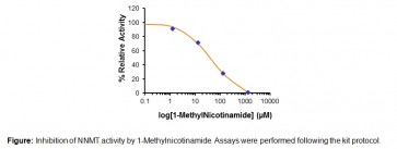 N′-Nicotinamide Methyltransferase (NNMT) Inhibitor Screening Assay Kit