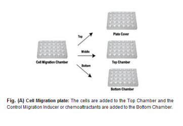 EZCell™ Cell Migration/Chemotaxis Assay Kit, 3 µm