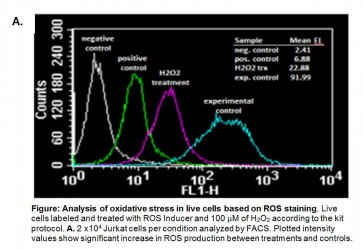 Reactive Oxygen Species (ROS) Detection Assay Kit