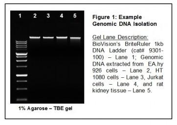 Mammalian Cell Genomic DNA Isolation Kit
