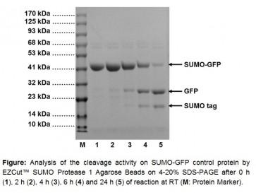 EZCut™ SUMO Protease 1 Agarose Beads