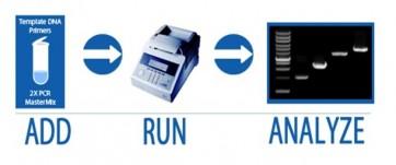 Ready™ PCR Mix
