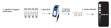 ImageReady™  PCR Mix