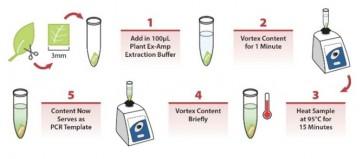 PlantAdvance™ PCR Kit