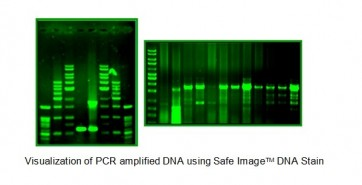 SafeImage™ Green DNA Stain