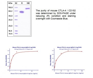Human CellExp™ CTLA-4/CD152, mouse recombinant