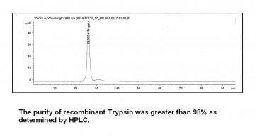 Trypsin, Recombinant, Proteomics grade