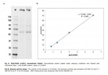 Fatty Acid Amide Hyrdrolase 1 (FAAH1), Active, Human Recombinant