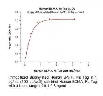 Human CellExp™ BCMA / TNFRSF17, Fc Tag, Human recombinant