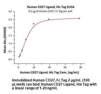 Human CellExp™ CD27 Ligand/ CD70, Human Recombinant