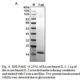 Human CellExp™IL-2, Human Recombinant