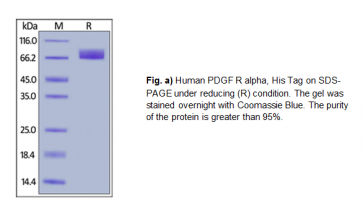 Human CellExp™ PDGF R alpha / PDGFRA, Human Recombinant