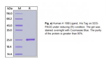 Human CellExp™ 4-1BB Ligand/TNFSF9, Human recombinant