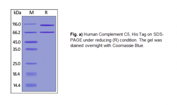 Human CellExp™ Complement C5, Human Recombinant