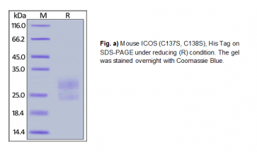 Human CellExp™ ICOS / CD278, Mouse Recombinant