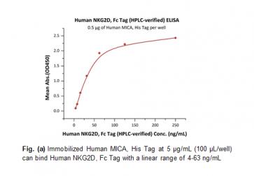 Human CellExp™ NKG2D / CD314, Fc Tag, Human Recombinant
