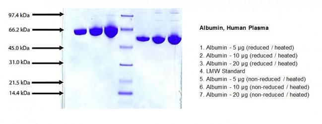 albumin  human plasma