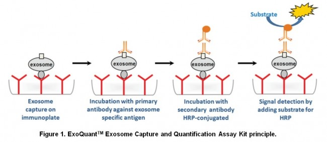 Exosome外泌體定量分析套組 Overall Exosome Quantification Assay