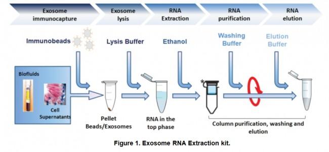 Tumorexorna Tumor Derived Exosome Immunocapture And Rna Extraction Kit 10 Reactions K1221 Biovision Inc