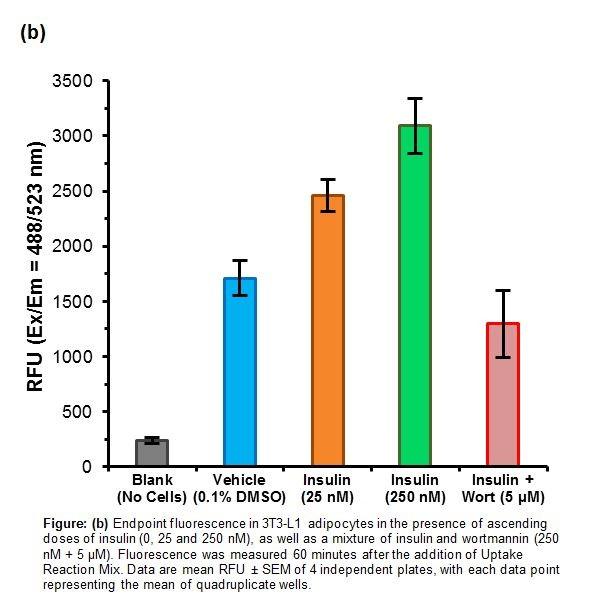 Fatty Acid Uptake Assay Kit Cell Based K408 Biovision Inc